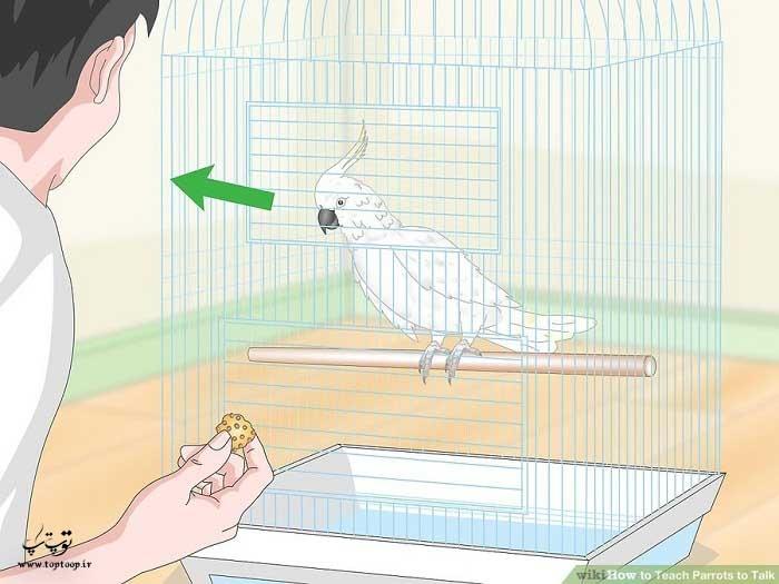 منتظر نگاه طوطی بعد از آوردن اسم خوراکی باشید