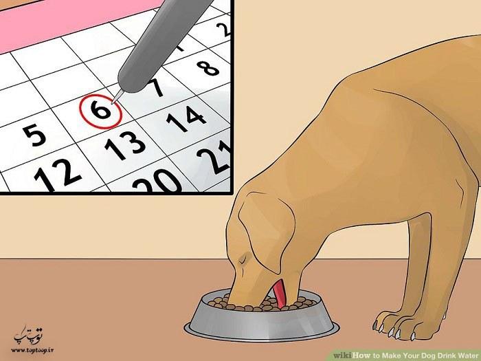 تنها در زمان سرو غذا را در اختیار سگ بگذارید