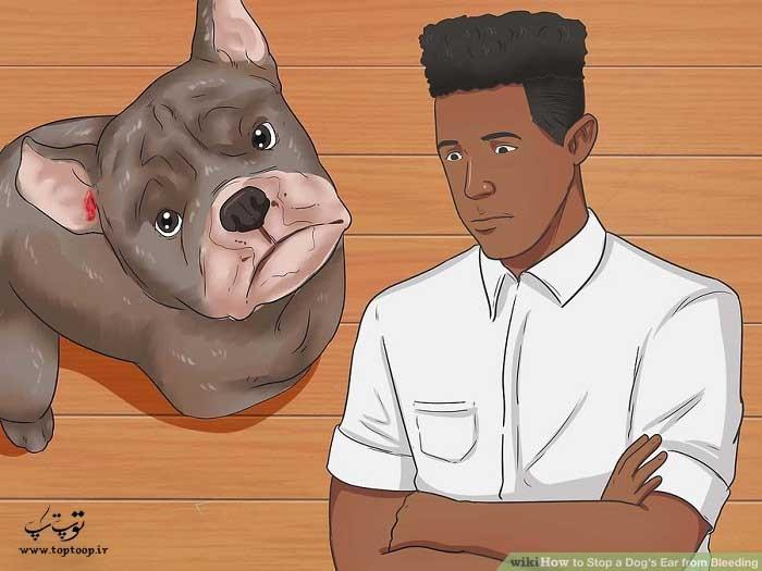 چگونه خونریزی گوش سگ را متوقف کنیم