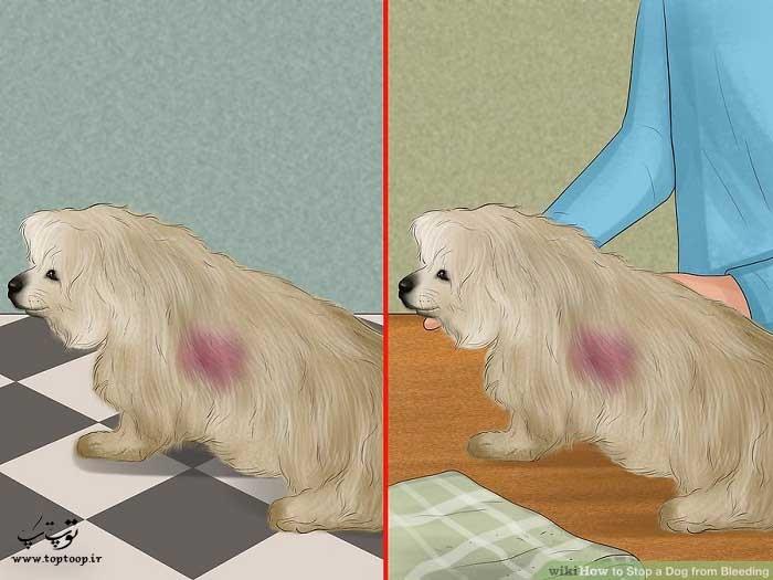 راه های جلوگیری از خونریزی سگ