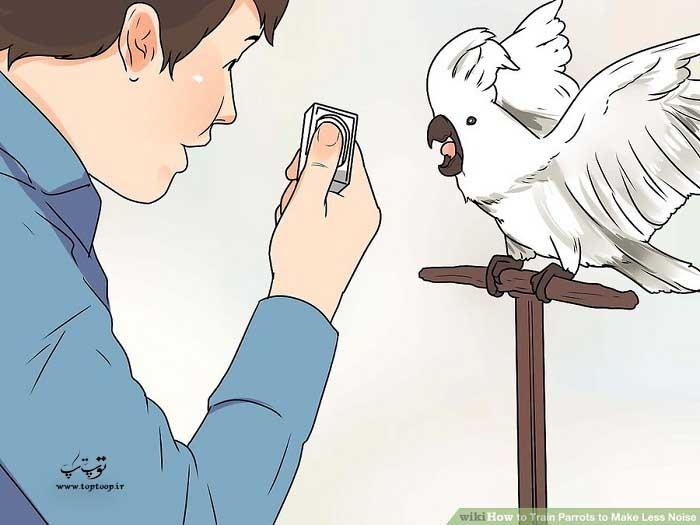 آموزش پرنده با صدای کلیک