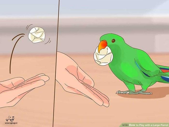 نحوه ی بازی با طوطی خانگی