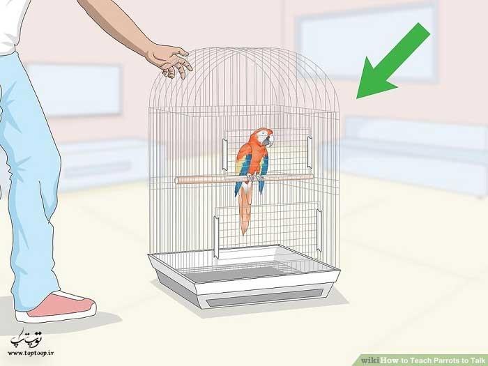 قرار دادن قفس طوطی در اتاق نشیمن