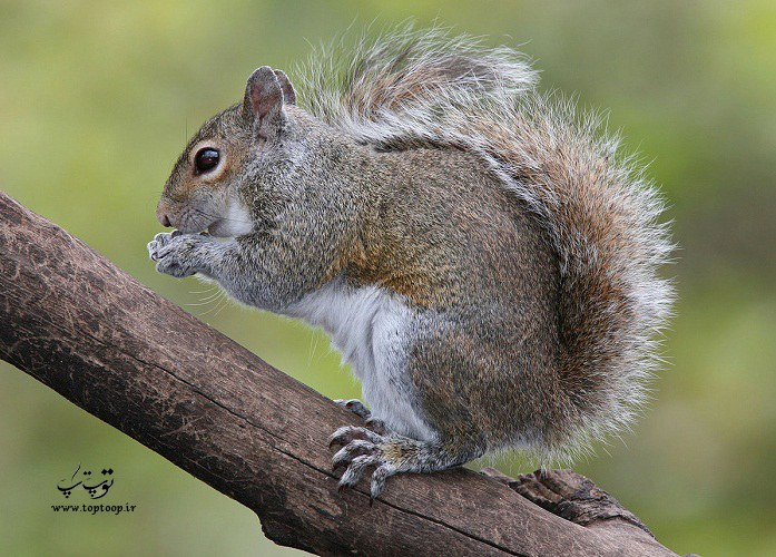 معرفی اسم زیبا برای سنجاب های دوستداشتنی