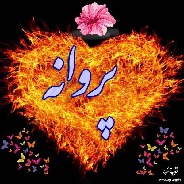 عکس نوشته برای اسم پروانه