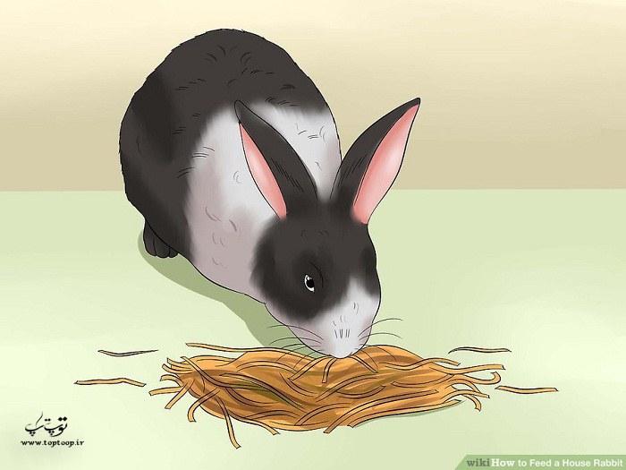 چگونگی تغذیه خرگوش در خانه