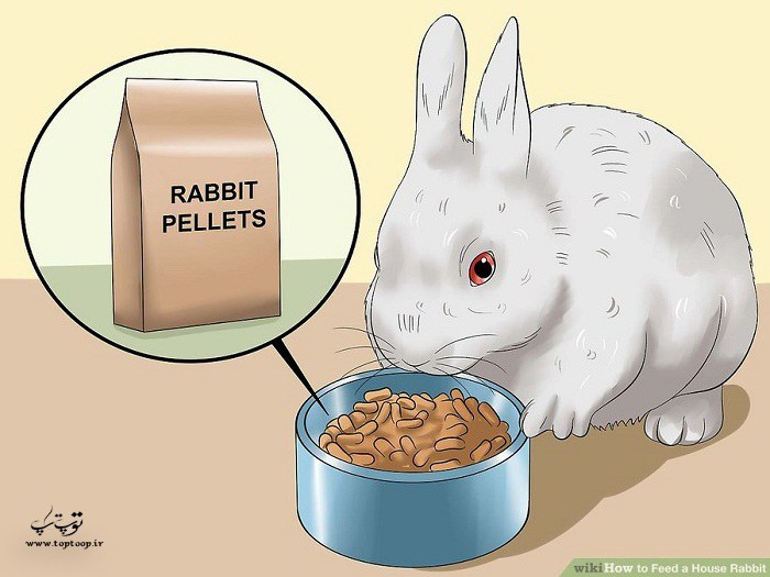 نحوه نگهداری و تغذیه خرگوش