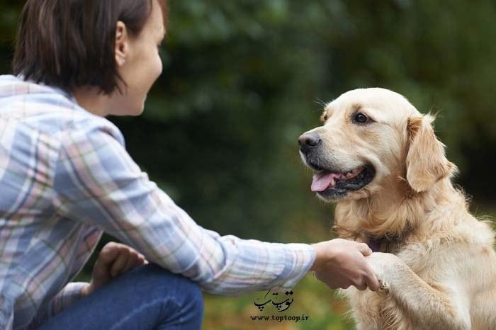 چگونه با سگ ها حرف بزنیم