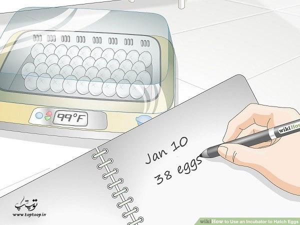چگونه با دستگاه جوجه کشی تخم مرغ کار کنیم