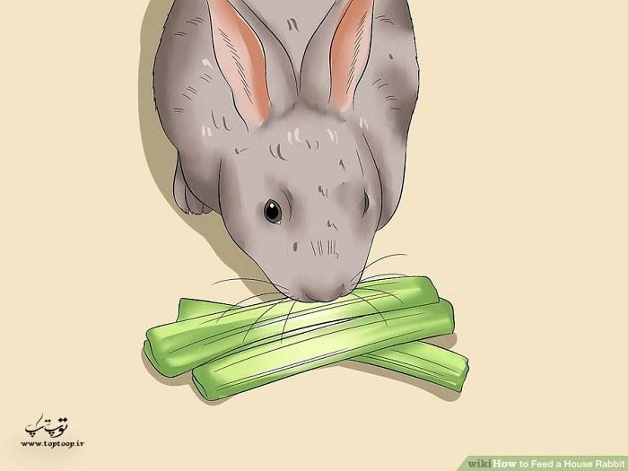 روش تغذیه خرگوش