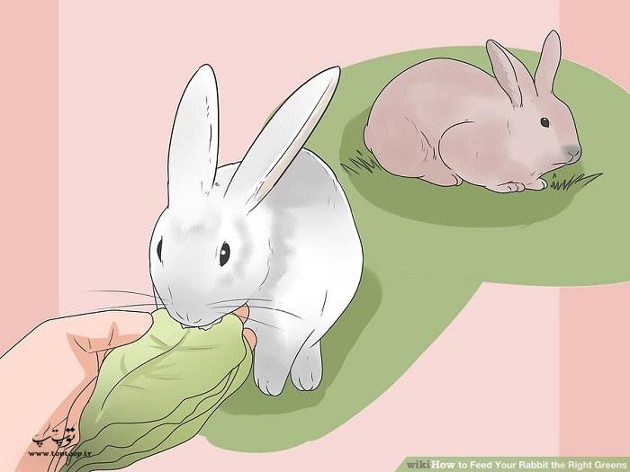 بهترین سبزی برای خرگوش