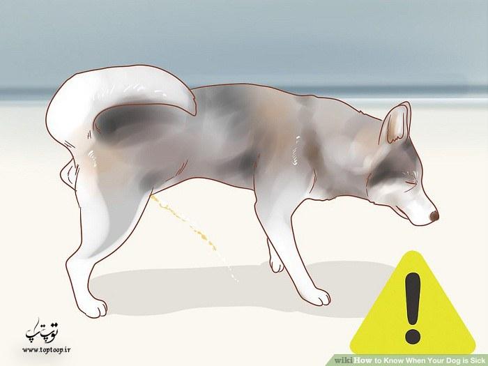چگونه بفهمیم سگ مریض است + عکس