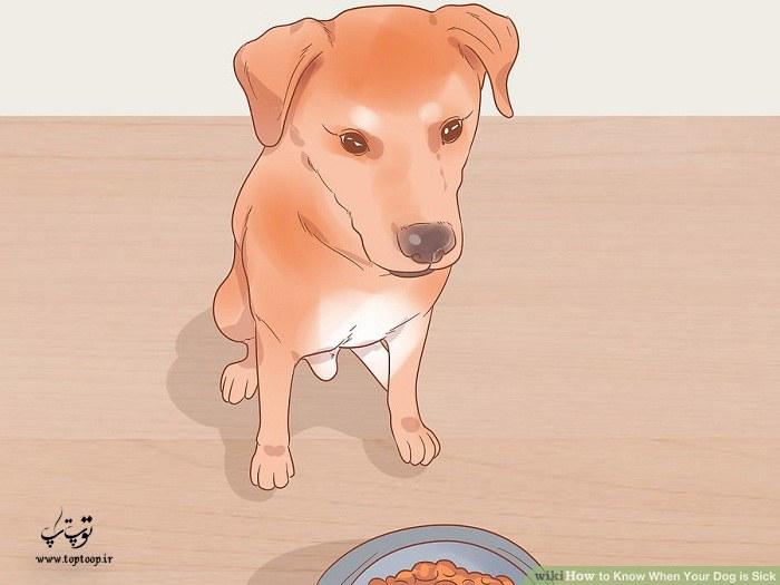 نشانه های سگی که مریض است