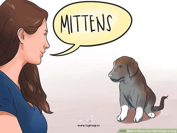 چگونه بر روی توله سگ یا سگ خود نام بگذاریم