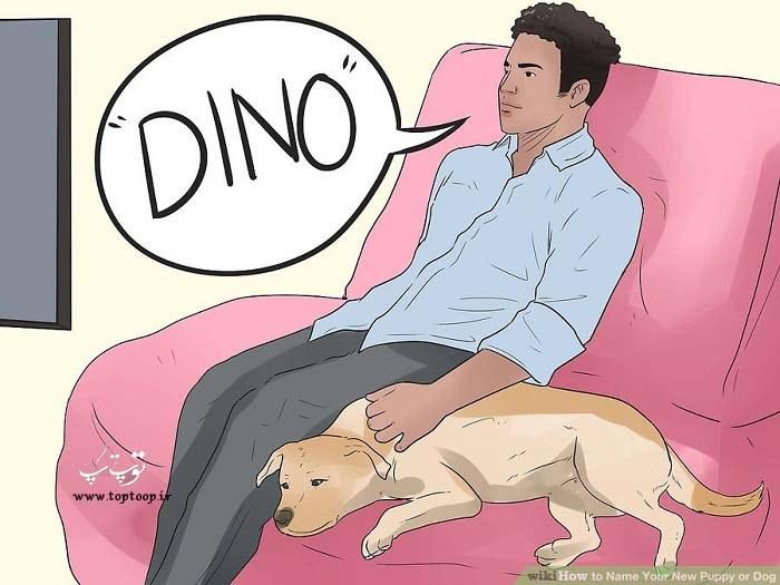 چگونه بهترین اسم را برای توله سگ انتخاب کنیم