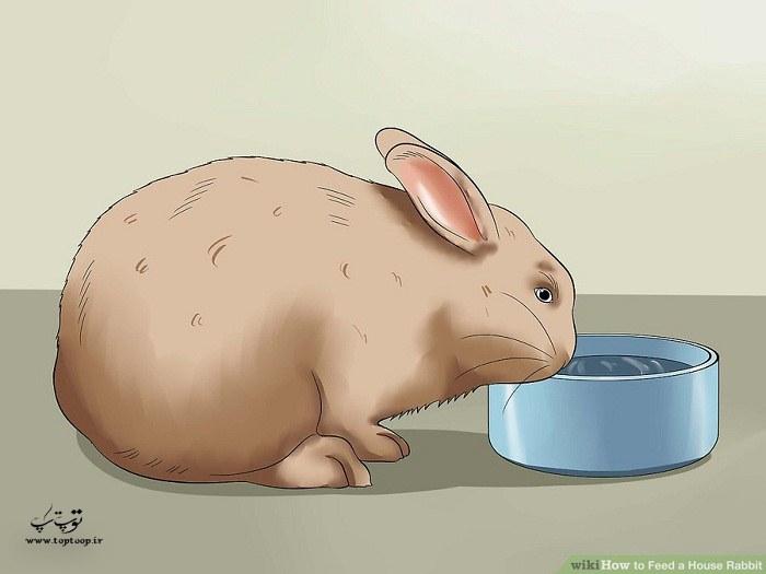 چگونه خرگوش را تغذیه کنیم ، نحوه ی تغذیه خرگوش
