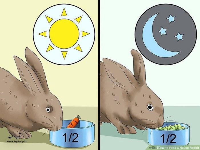 نحوه ی تغذیه کردن خرگوش