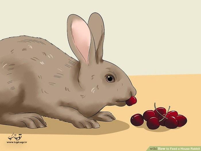 میوه دادن به خرگوش