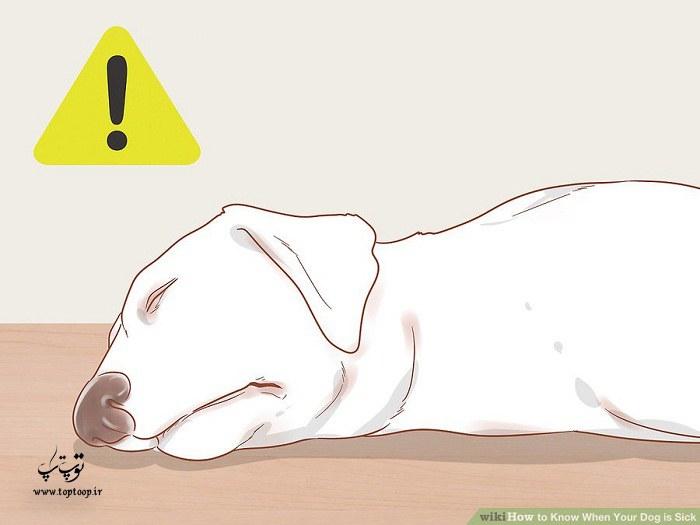 چگونه بفهمیم سگمان مریض شده