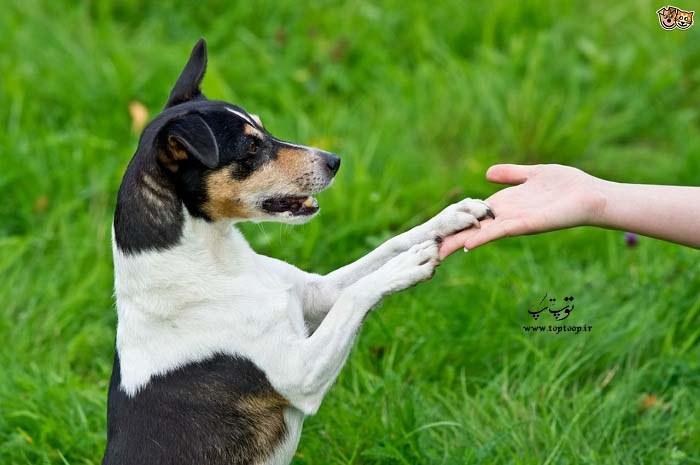 چگونه سگی مطیع داشته باشیم؟