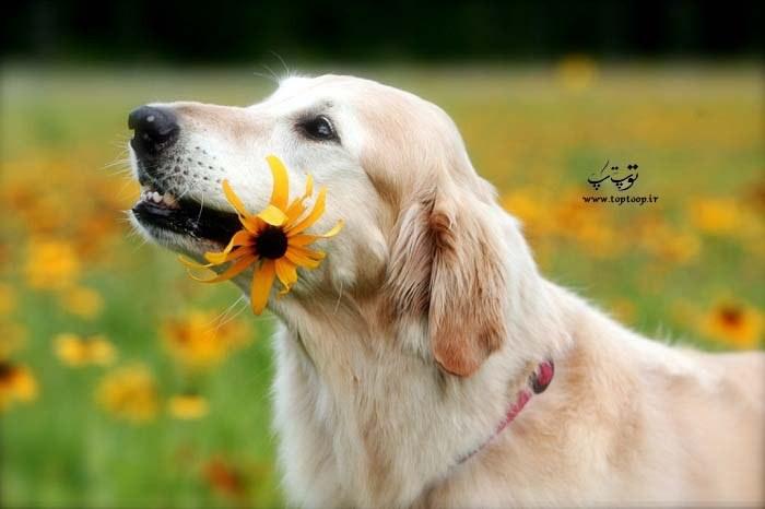 چگونه سگ مطیع داشته باشیم