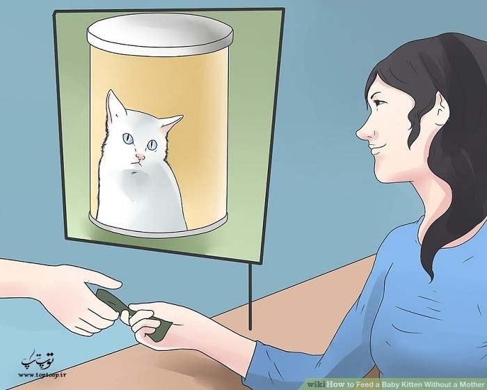 غذا دادن به بچه گربه بدون مادر