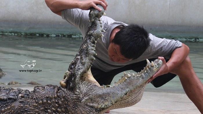 عکس دهان باز شده تمساح