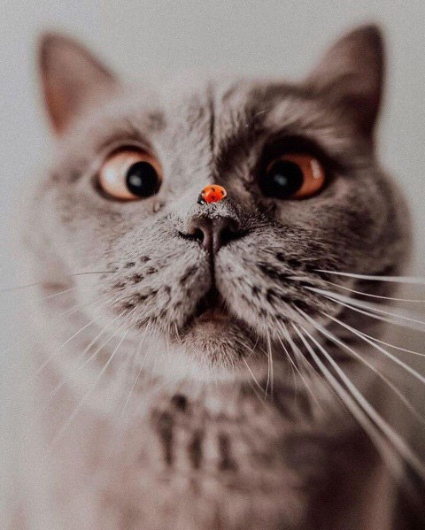 عکس برای پس زمینه گوشی گربه