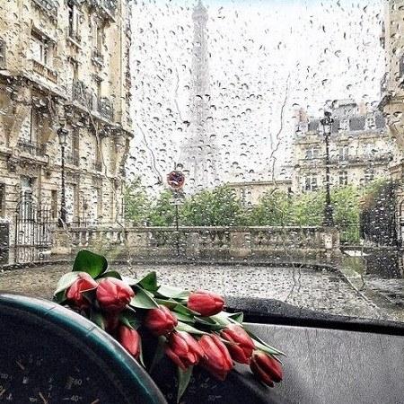 عکس پروفایل باران روی شیشه ماشین با گل