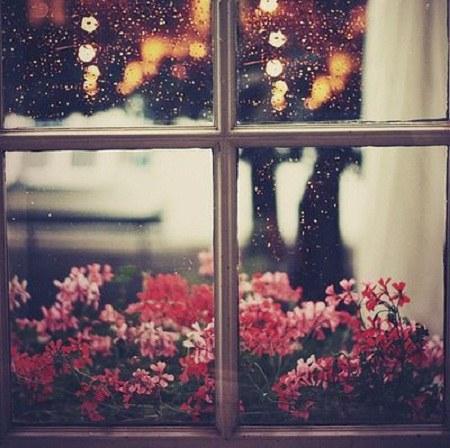 عکس پروفایل شبنم باران روی شیشه