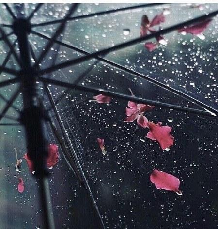 عکس پروفایل شبنم باران روی پنجره