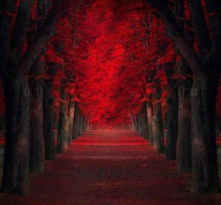 عکس پروفایل طبیعت درختان