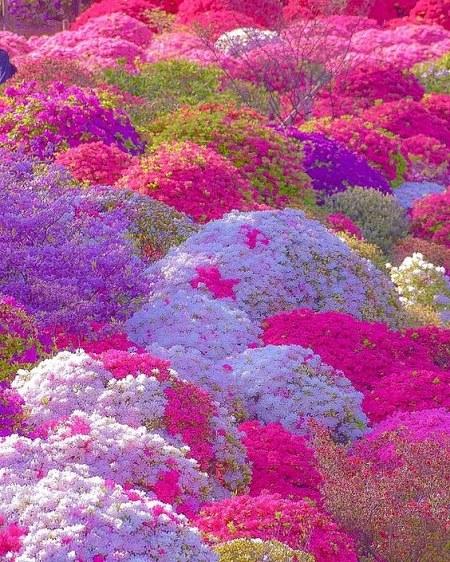 پروفایل طبیعت گلها