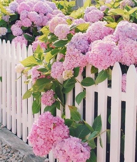عکس پروفایل گلها در طبیعت