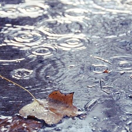 عکس پروفایل باران و افتادن برگ از درخت