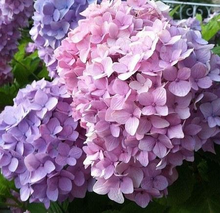 پروفایل طبیعت و گلهای بهاری