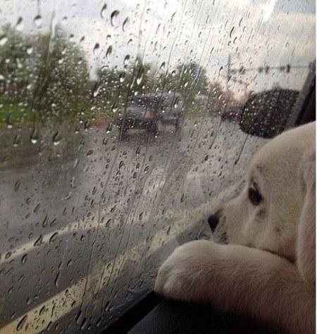 عکس پروفایل غمگین بارانی