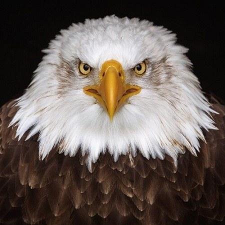 آلبوم عکس عقاب برای پروفایل