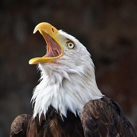 عکس عقاب برای پروفایل جدید