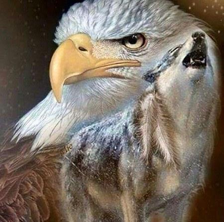 عکس پروفایل عقاب با گرگ