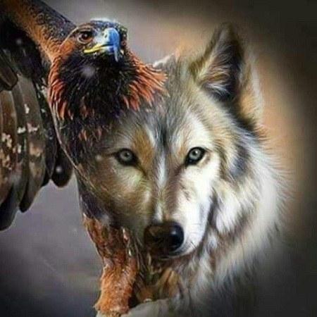عکس عقاب برای پروفایل