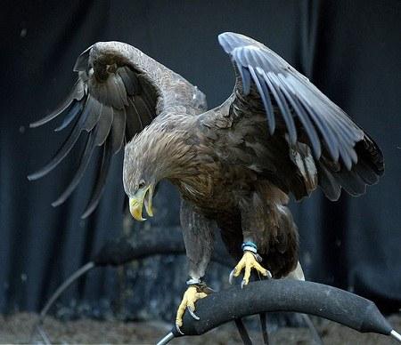 عکس عقاب برای پروفایل 2021 جدید