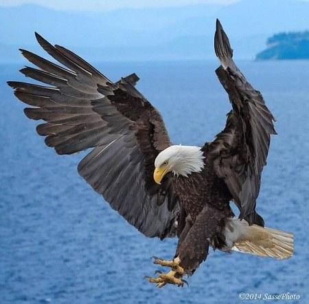 عکسهای دیدنی از عقاب برای پروفایل