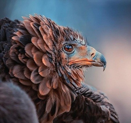 عکس پروفایل عقاب 2021 -99
