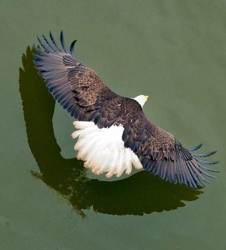 عکس عقاب برای پروفایل واتساپ