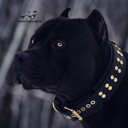 عکس سگ نگهبان قوی هیکل