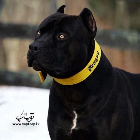عکس سگ نگهبان ترسناک