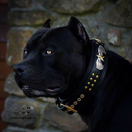 عکس سگ نگهبان زغالی