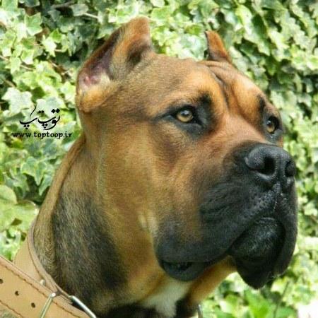 عکس زیبای سگ نگهبان