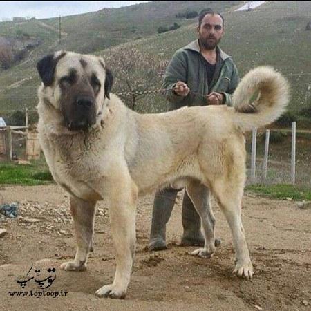 عکس سگ نگهبان کنار صاحبش